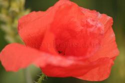 fleur-10.jpg