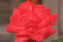 fleur-11.jpg