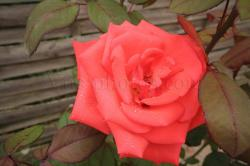 fleur-13.jpg