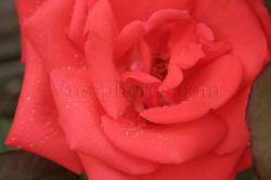fleur-14.jpg