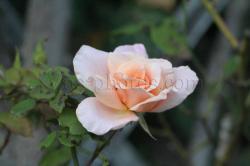 fleur-3.jpg