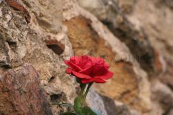 fleur-6.jpg