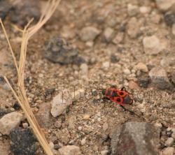 insecte-2.jpg
