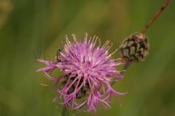 insecte-3.jpg