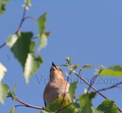 oiseau-5.jpg