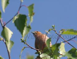 oiseau-6.jpg